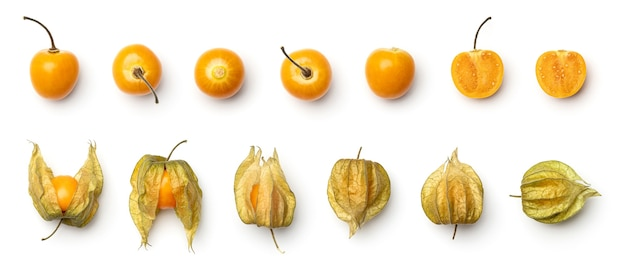 Collection of physalis berries
