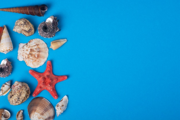 Collection of seashells on a blue background with copy space