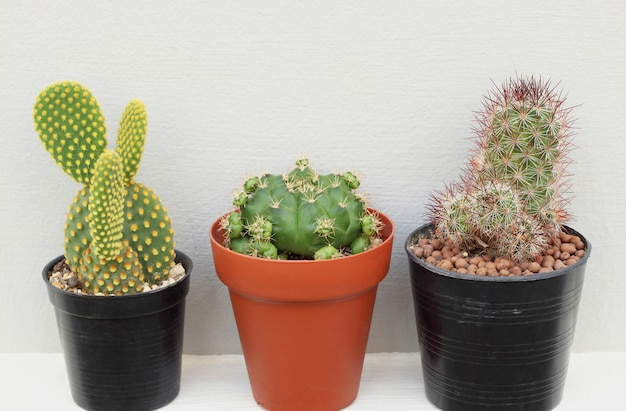 Collection of small cactus or succulent plants on white and grey background.