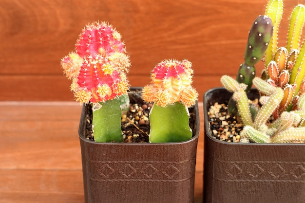 Collection of small cactus or succulent plants with copy space.