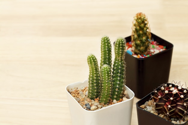 Collection of small cactus or succulent plants