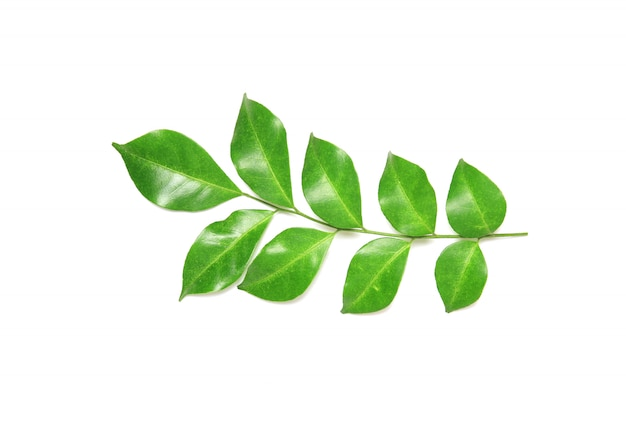 Collection tropical green leaf