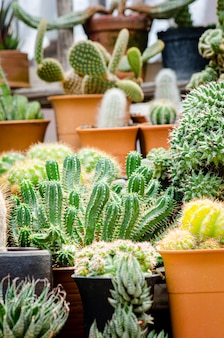Collection of various cactus plants in different pots
