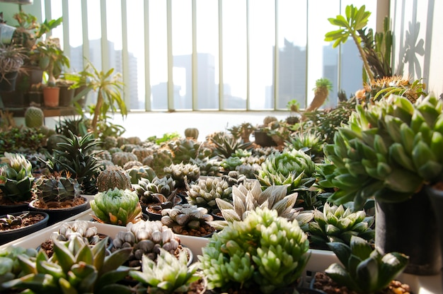 Collection of various cactus and succulent plants in balcony condominium