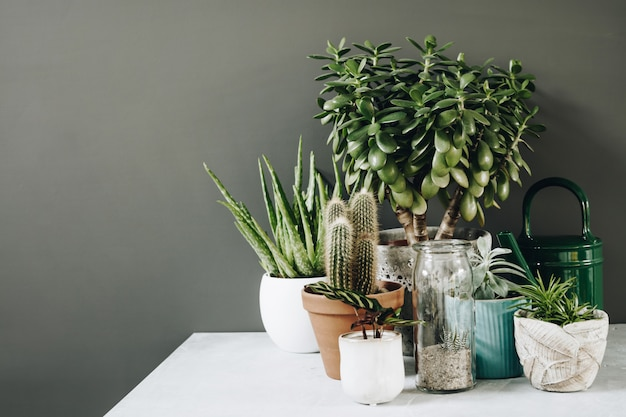 Collection of various cactus and succulent plants in different pots.