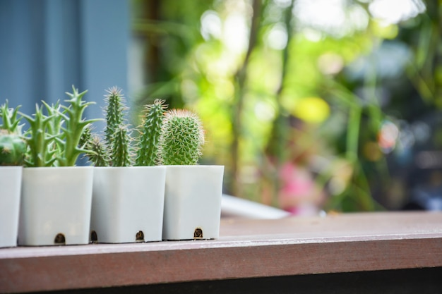 Collection of various cactus and succulent plants in white plastic pots on wooden table