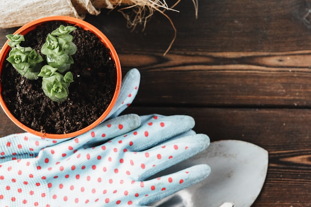 Collection of various house plants, gardening gloves, potting soil and trowel on white wooden background