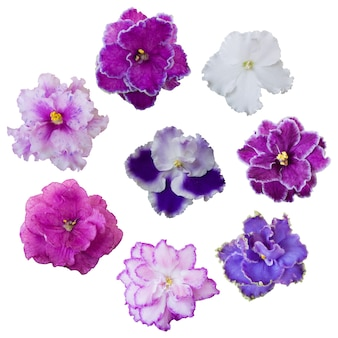 Collection of various pink, white and violet flowers isolated on white surface