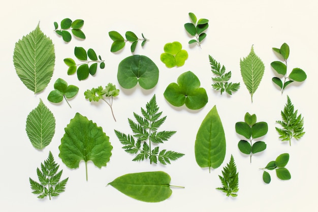 Collection of wild forest leaves of various types