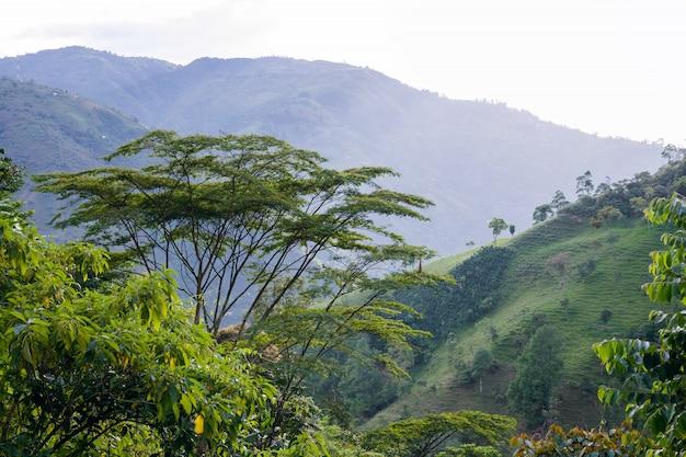 コロンビアの山の風景。コーヒー栽培エリア。アンティオキア。