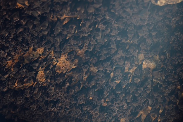 Colony of bats in the cave