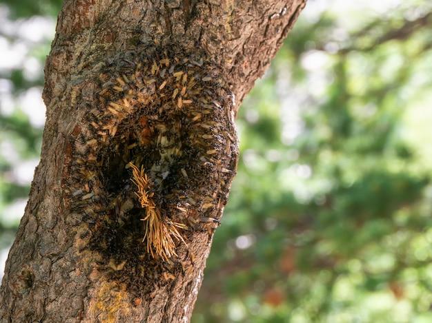 속이 빈 나무에 날아다니는 개미떼. 날아다니는 개미의 덩어리를 닫습니다.