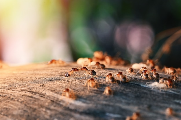 Colony of termites eating wood