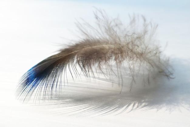 흰색 표면에 색 새 깃털 거짓말
