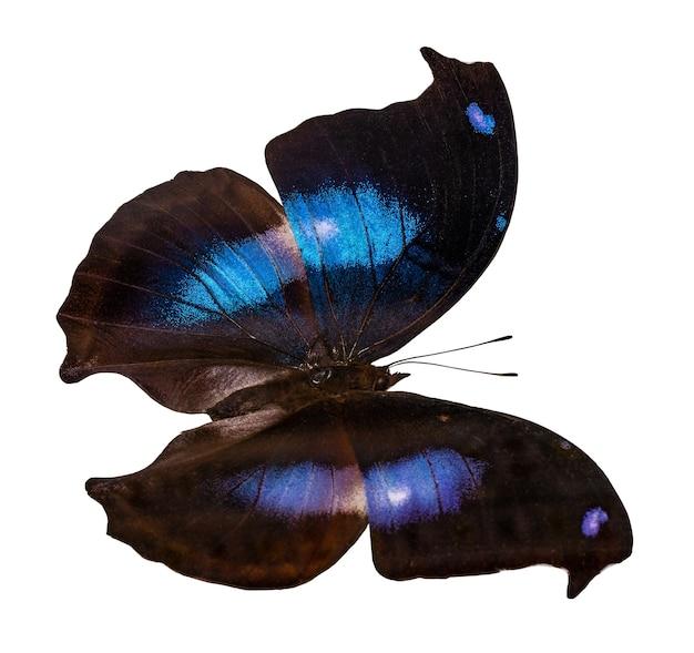 클리핑 패스, napeocles jucunda와 흰색 배경에 고립 된 컬러 나비.