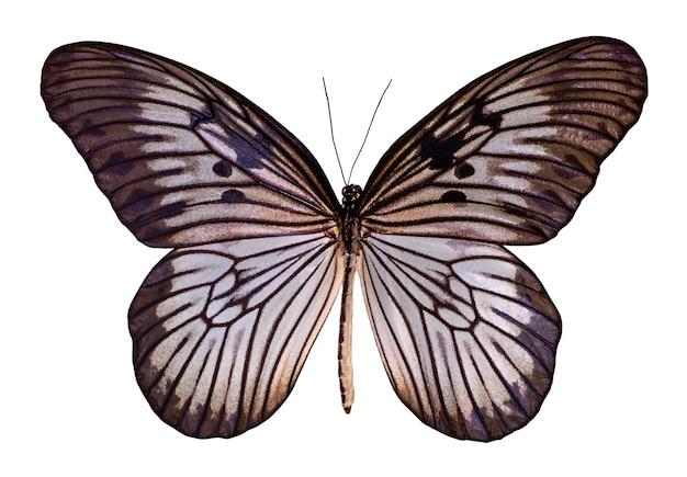 컬러 나비, 클리핑 패스와 함께 흰색 배경에 고립.
