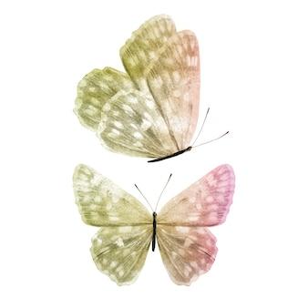 分離された色の蝶
