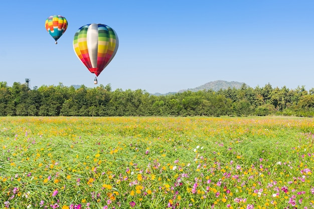 Color hot air balloon in sky over the green rice filed