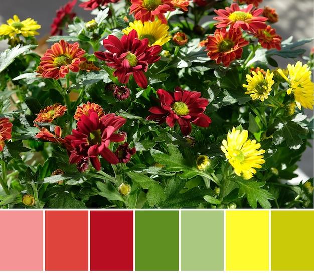 Палитра подбора цветов из красных цветов хризантемы