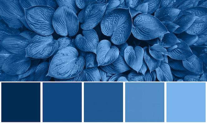 자연 질감, 컬러 팔레트 2020 년의 유행 블루 색상에서 영감을 된 색상 팔레트. 열 대 잎 배경입니다. 패션 컨셉