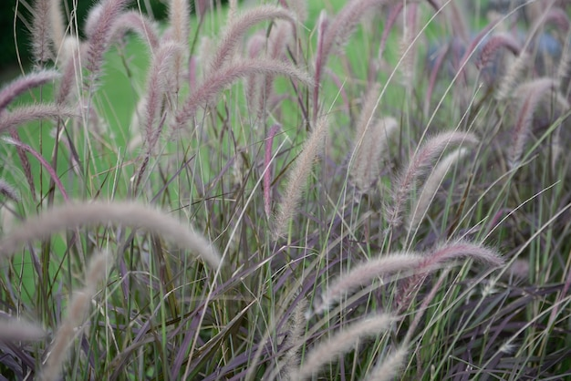 Color pink muhly grass pattern holiday