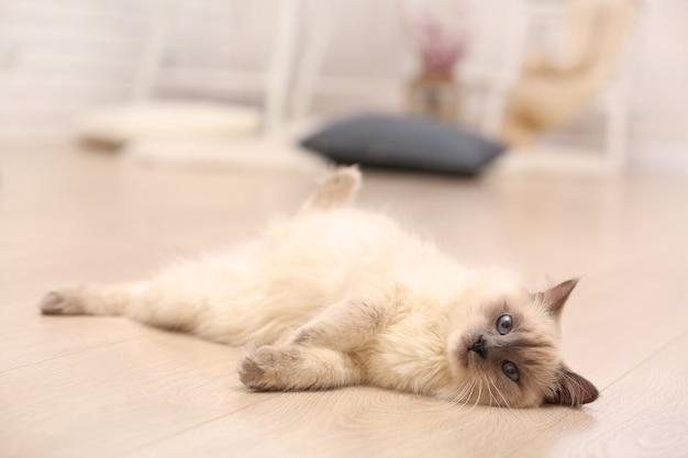 リビングルームの木の床に横たわっているカラーポイントの猫