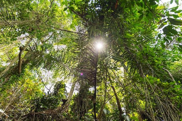 컬러 테라피. 태양은 이국적인 정원의 녹색 잎을 통해 빛나고, 섬의 따뜻한 날
