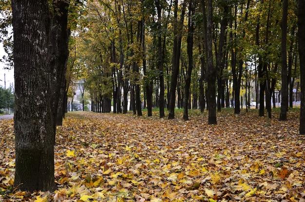 Colored autumn landscape