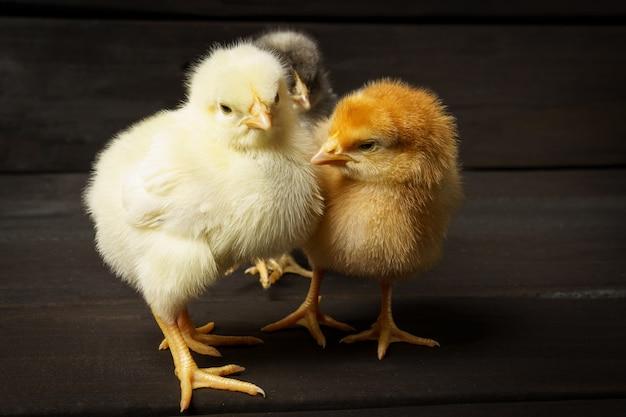 Цветные цыплята на темном деревянном столе
