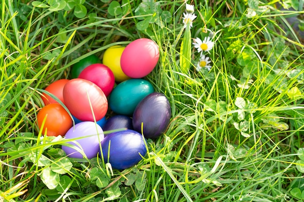 Colored eggs in natural nest on the ground. copy space.