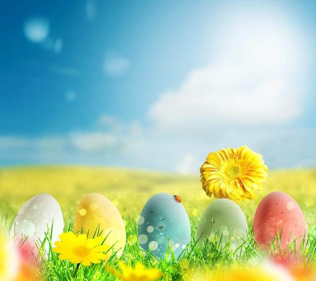 Цветные яйца на зеленом поле и цветы