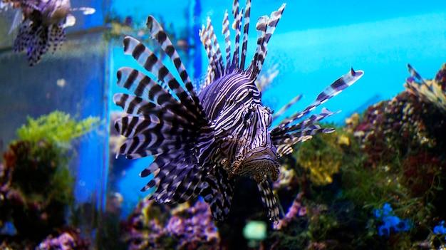 Цветная рыба с перьями под водой