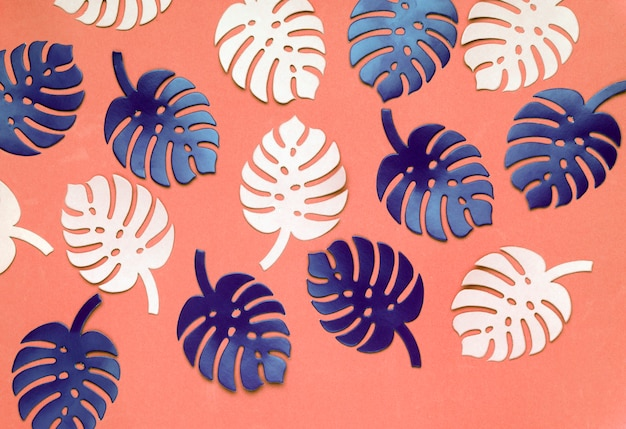 Colored monstera plant background. monstera leaves on coral color background.