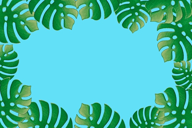 Colored monstera plant background. monstera leaves on turquoise background. summer minimal concept. space for text