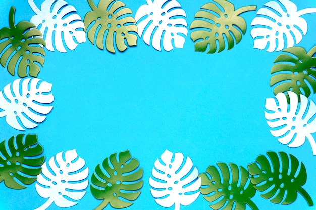 Colored monstera plant background. monstera leaves on turquoise background.