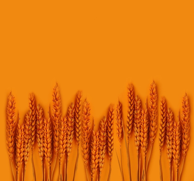 Colored orange spikelets plant