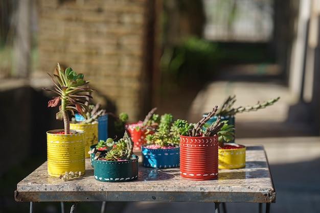 素朴なテーブルの上に小さな多肉植物で飾られた色付きの鉢