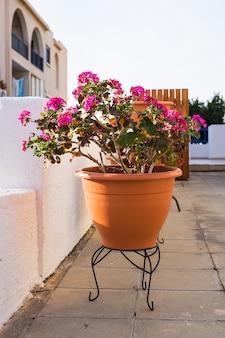 컬러 화분에 심은 식물. 다른 화분과 묘목