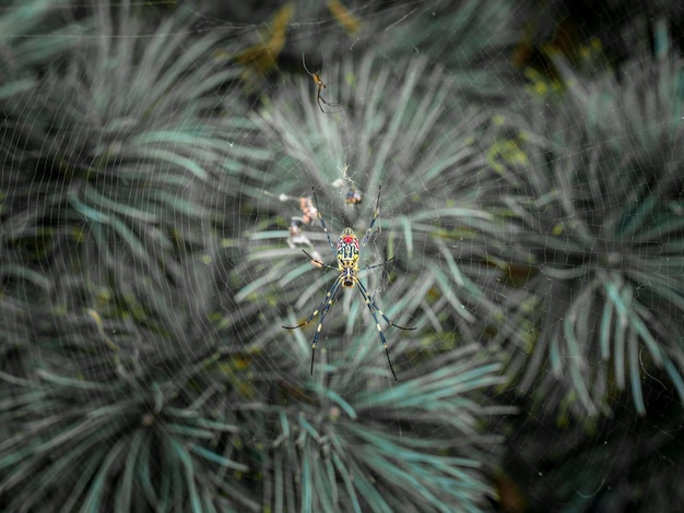 Colored spider on pine