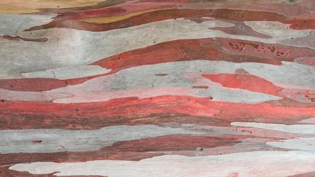 ユーカリの木の樹皮のカラフルな概要