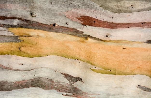 ユーカリの木の樹皮のカラフルな抽象的なパターンテクスチャ