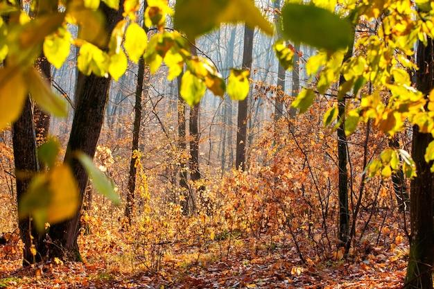 カラフルで霧の秋の森