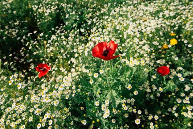 Яркие и освежающие зеленые садовые цветы есть много видов сад чиангмая