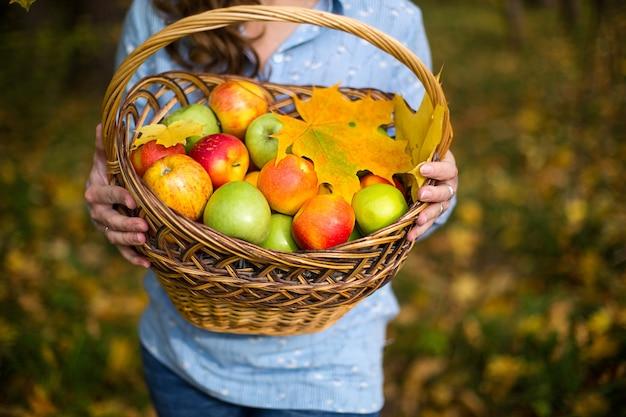 農家の女性の手でバスケットにカラフルなリンゴ。