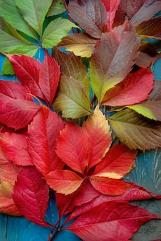 Colorful autumn fallen leaves on blue background