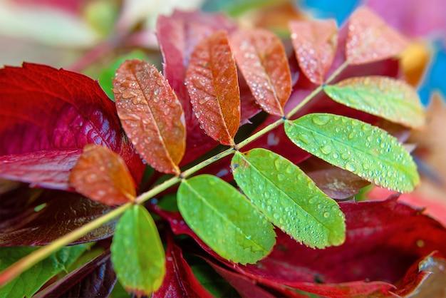 Красочные осенние опавшие листья на синем фоне