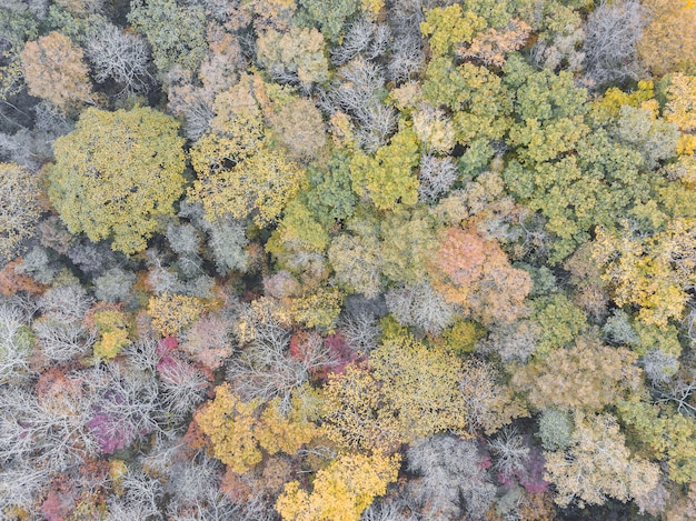 Colorful autumn forest aerial drone view. earth day, environment protection.