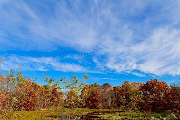 Красочные осень лес озеро река небо облака перистые облака