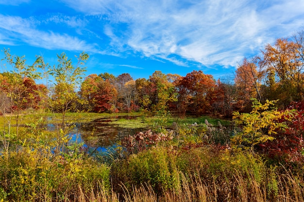 Colorful autumn forest lake river sky clouds