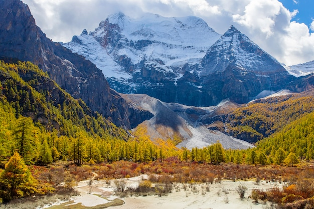 Colorful in autumn forest and snow mountain